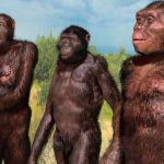 Human evolution: back to the trees?