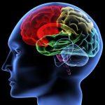 Que se passe-t-il dans le cerveau quand une pensée naît?