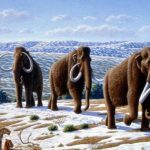 Harvard University biologists decide to resurrect mammoths in two years