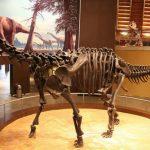 I Sydafrika fandtes resterne af en af de største dinosaurer i juraperioden