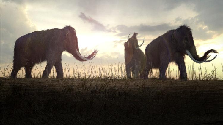 Extinct species queue for resurrection