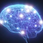 Forskere holdt først hjernevævet i live i flere uger
