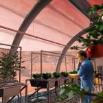 Is it possible to grow plants in the lunar and Martian soil?