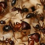 The ant colony has memories that the ants themselves do not have.