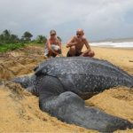 # video | What does the largest turtle in the world look like?