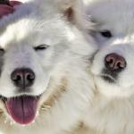 Кучетата удължават живота на стопаните си
